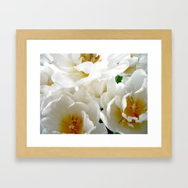 White tulips with afterglow centers Framed Art Print