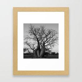 Boab Family in black and white Framed Art Print