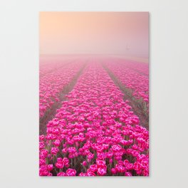 I - Sunrise and fog over rows of blooming tulips, The Netherlands Canvas Print