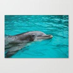 Dolphin.  Canvas Print