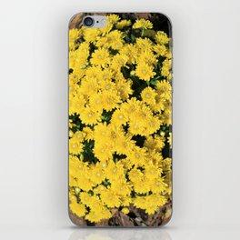 Bright Yellow Fall Mums iPhone Skin