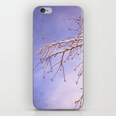snowy branches iPhone & iPod Skin