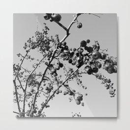 Dried Fruit Metal Print