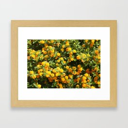 Blooming Lantana Plant Framed Art Print