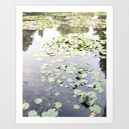 Monet's Water Lilies Art Print