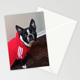 Bruno (Khalua) (Client File) (Photo #4) Stationery Cards