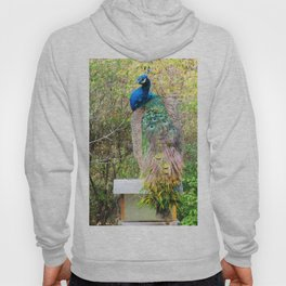 Peacock on Bird Feeder Hoody