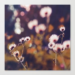 Tiny floral dreams of light Canvas Print