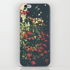 Summer Roses Series  - I -   iPhone & iPod Skin