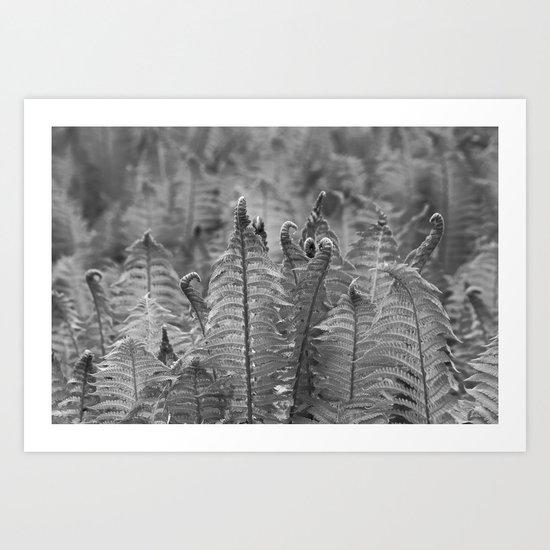 Dunvegan Ferns Art Print