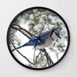 Beautiful Blue Jay Wall Clock