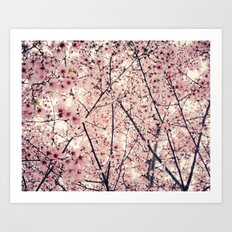 Blizzard of Blossoms Art Print