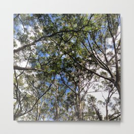 Forest 2 Metal Print