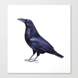 Little Raven Canvas Print