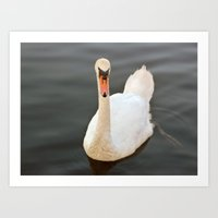 black swan Art Prints featuring Swan by Lynn Bolt