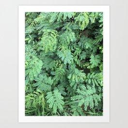 Leafy Gaze Art Print