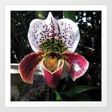 Orchid Lavender  Art Print