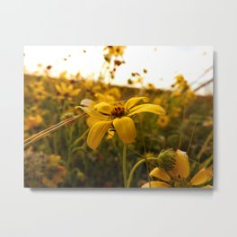 There exists little in this world finer than flowers in the spring Metal Print