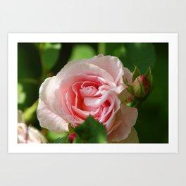 Bridal Pink Rose Bud Pastel Pink with Green Leaves Art Print