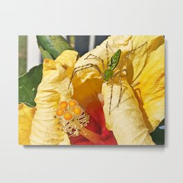 Translucent green spider on the yellow hibiscus Metal Print