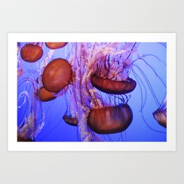 sea nettles Art Print