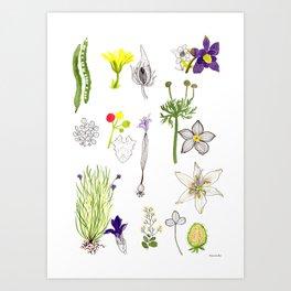 Herbarium #3 Art Print