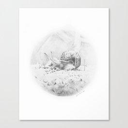 Cornelius Struts His Stuff Canvas Print