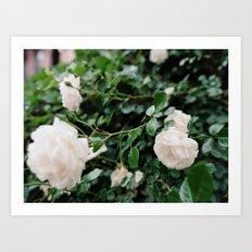 film + flowers + brooklyn Art Print
