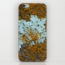 Orange and green moss in tree bark iPhone Skin