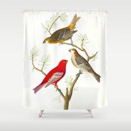 Pine Grosbeak Bird Shower Curtain