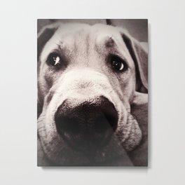 Brown Nose Metal Print