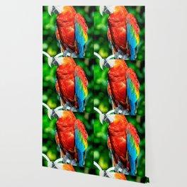 Amazon Parrot Wallpaper