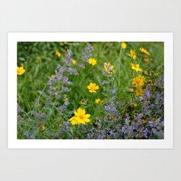 Wildflowers , Coreopsis and Tickseed Art Print