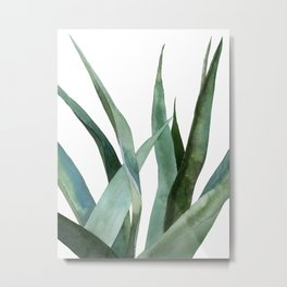 Agave plants Metal Print
