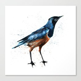 African Starling Canvas Print