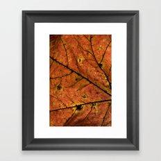 Fall Leaf III Framed Art Print