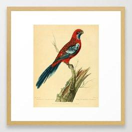 """""""The Splendid Parrot"""" by Sarah Stone, 1790s Framed Art Print"""