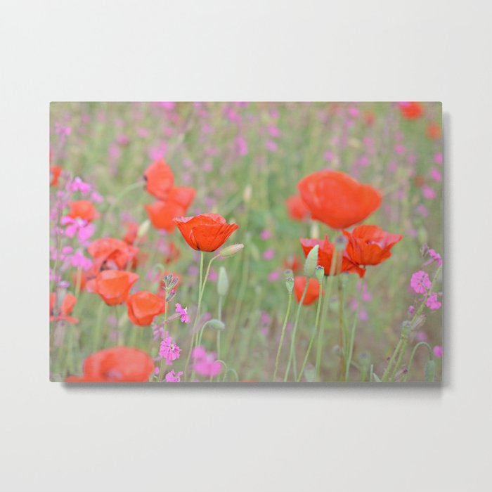 Poppies and Campions Metal Print