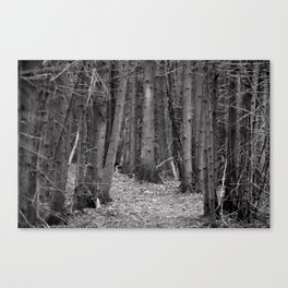 compression path Canvas Print