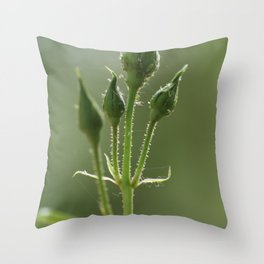 New Rose Unbloomed Throw Pillow
