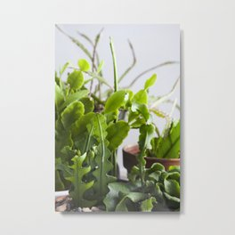 Jungle Cactus  |  The Houseplant Collection Metal Print