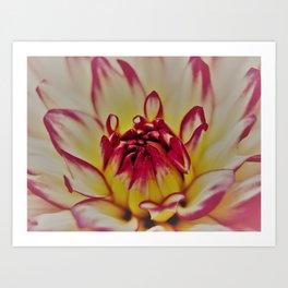 Blooming flower Art Print
