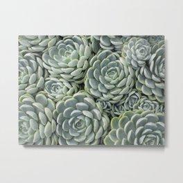 Pale Green Succulent Garden Metal Print