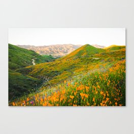 Walker Canyon Super Bloom Canvas Print