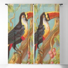 Toco Toucan Birds of the Tropics Series by A&G Blackout Curtain