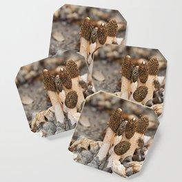 Phallus Fungi Coaster
