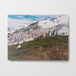 Marmot at Mt. Rainier Metal Print