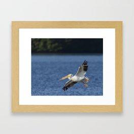 White Pelican In Flight Framed Art Print