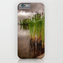 Driftwood And Cattails iPhone Case