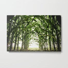Midwest Corn Metal Print